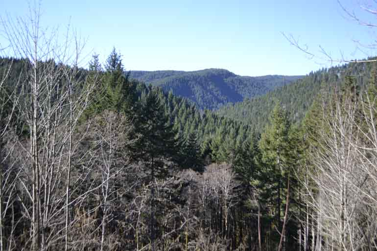 Roadside views from State Highway 6 in the Tillamook State Forest are special.