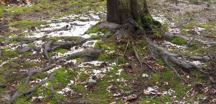 The ice from our impromptu hailstorm gathers underneath a tree.