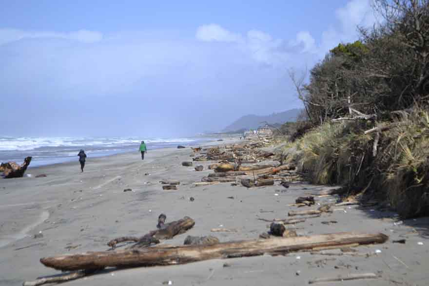 The high tide after a stormy night litters the beach with driftwood.